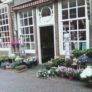 Klaas Droog Bloem & Plant image 3