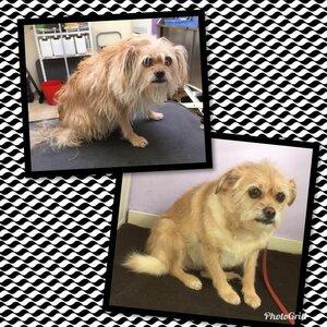 Hond en Haar image 1