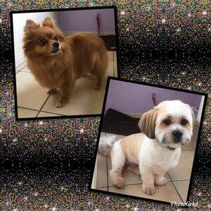 Hond en Haar image 3