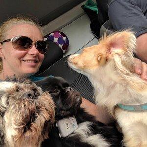 Hondenuitlaatservice Anouska image 3