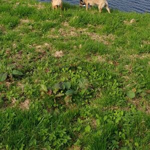 Hondenuitlaatservice Anouska image 4
