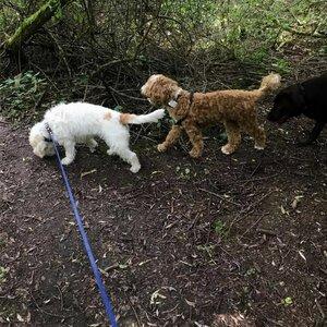 Hondenuitlaatservice Anouska image 6