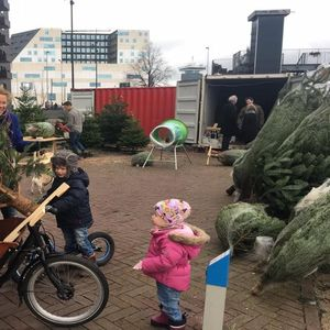 Kerstbomen Amsterdam image 4