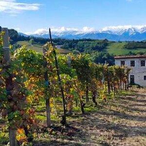 Zin In Piemonte image 2