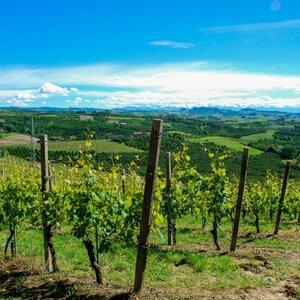 Zin In Piemonte image 3